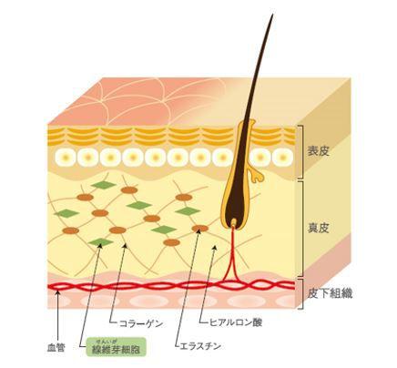 出典:http://www.demi.nicca.co.jp/biove/index.html