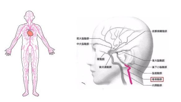 出典:http://www002.upp.so-net.ne.jp/ http://www.web-neurosurgery.com/