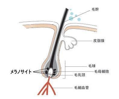 出典:http://goen-biyoushitsu.com/