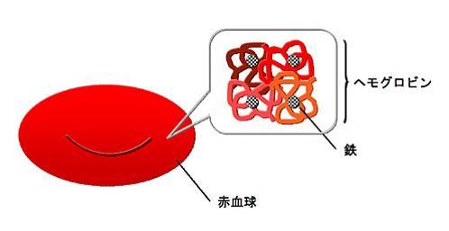 出典:http://www.keio-hematology.jp/