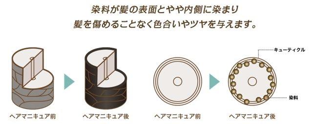 出典:http://www.cielo.jp/