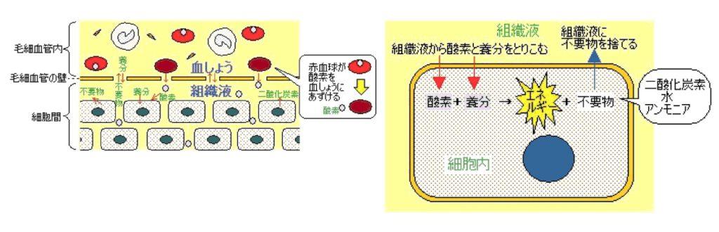 出典:http://www.e-kanpo.jp/