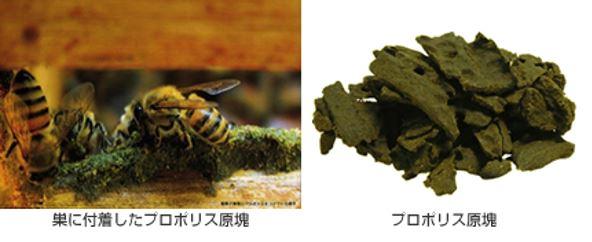 出典:http://www.kobata-soken.co.jp/