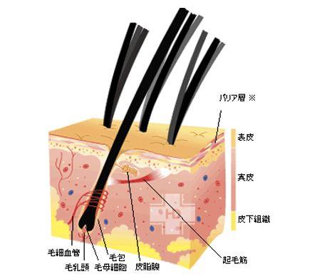 出典:http://www.hairdoctor.co.jp/