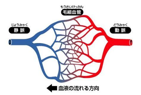 出典:http://www.sasaki-chiken.jp/