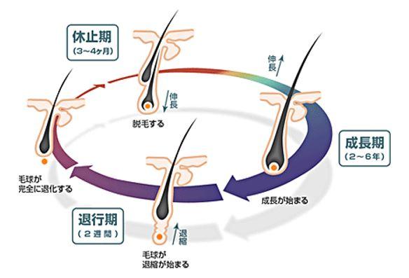 出典:http://minoru-hair.jugem.jp/