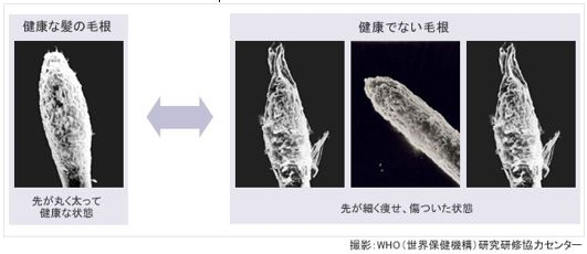 出典:http://www.helsinkiformula.co.jp/