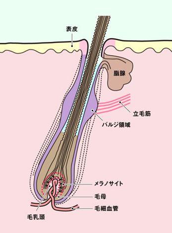 出典:http://wol.nikkeibp.co.jp/
