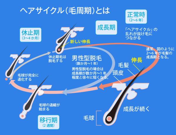 出典:https://www.aderans.co.jp/