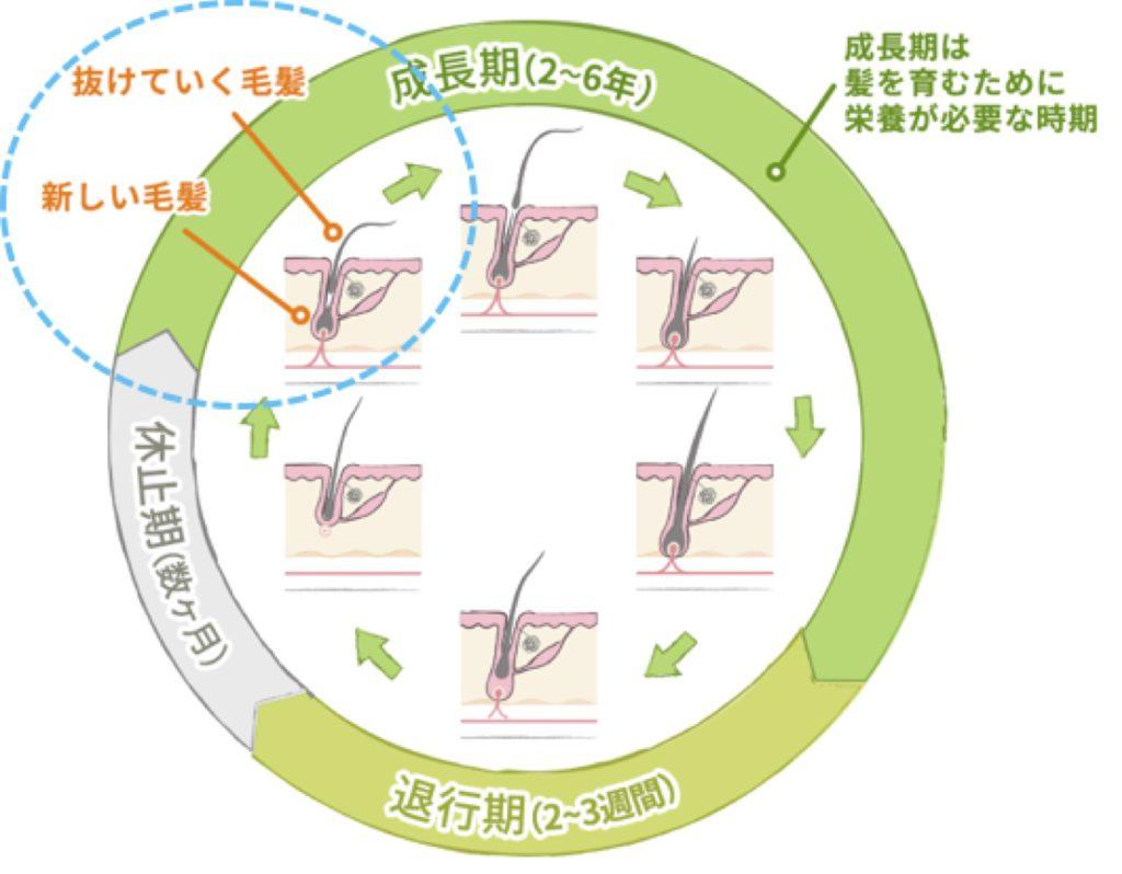 出典:https://kami-katsu.bayer.co.jp/
