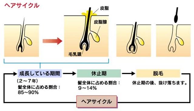 出典:http://www.zenyaku.co.jp/