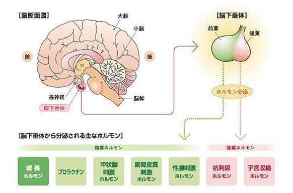 出典:https://ameblo.jp/jeenyus153/