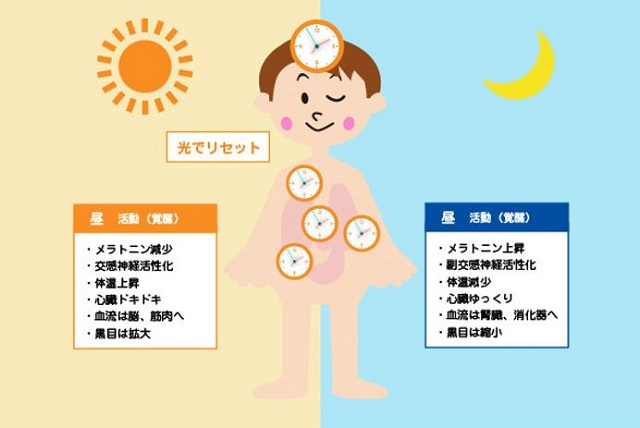 出典:http://nemuri-kurashi.jp/