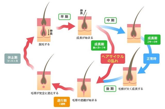 出典:http://trumpcard.jp/