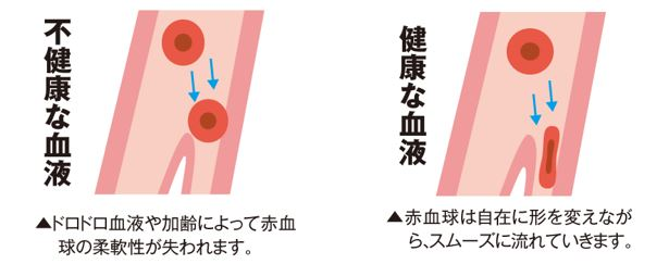 出典:http://www.kouraininjin.net/ginseng_q/2015winter/