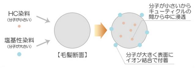 出典: https://www.rakuten.ne.jp/gold/shizenkan/