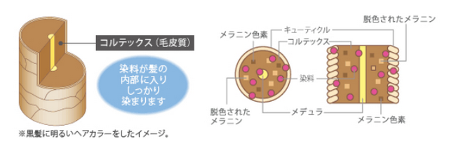 出典:http://www.hoyu.co.jp/