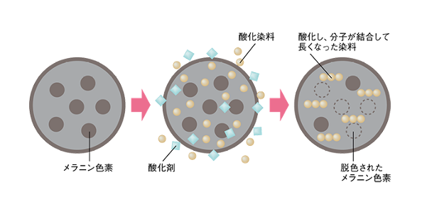 出典:http://sciencewindow.jst.go.jp/