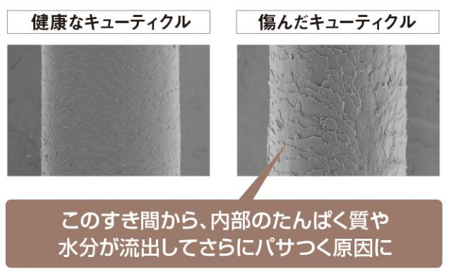 出典:https://www.duo.jp/