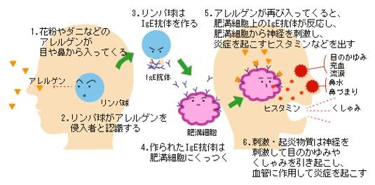 出典:http://www.japa.org/