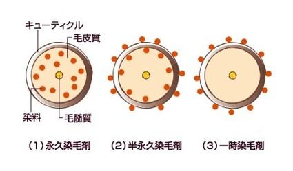 ※(1)2剤式白髪染め、(2)=カラートリートメント、(3)=カラースプレーなど 出典:https://allabout.co.jp/