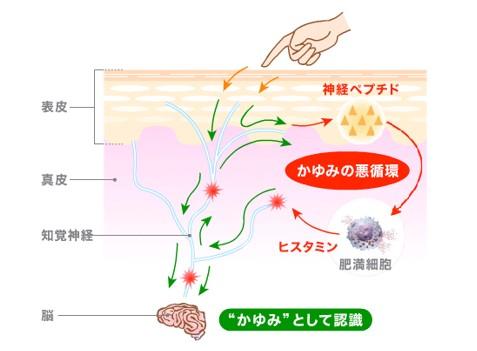 出典:http://www.kyowa-kirin.co.jp/kayumi/