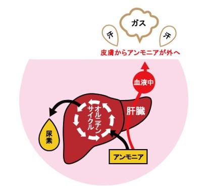 出典:http://trendy.nikkeibp.co.jp/
