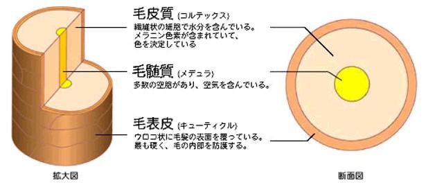 出典:http://hw001.spaaqs.ne.jp/tokoya/
