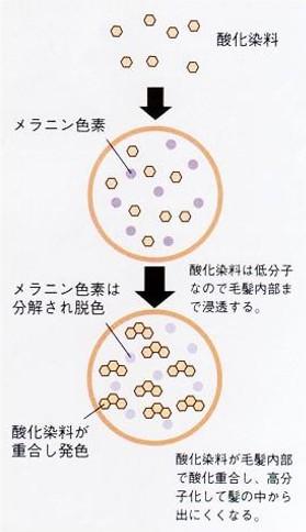 出典:http://www.fides.dti.ne.jp/~star/