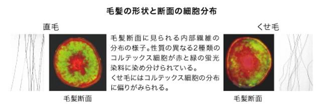 出典:https://www.kao.com/jp/