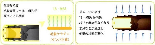 出典:http://bio-supply.jp/order/
