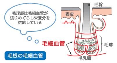 出典:http://www.haircare.jp/