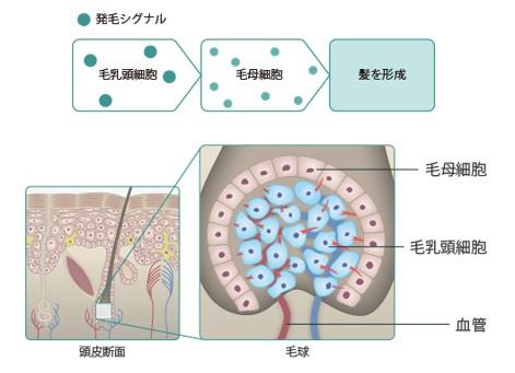 出典:https://www.kami-fusafusa.jp/
