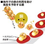 出典:http://www.wakasanohimitsu.jp/
