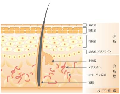 出典:http://dermal-labo.jp/