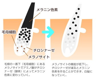 出典:http://shizenkaragenki.hamazo.tv/