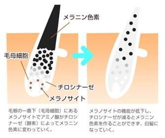 出典:http://www.shizenkaragenki.jp/