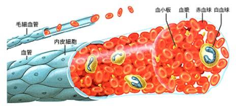 出典:http://www.ketsukyo.or.jp/