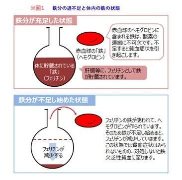 出典:https://www.fancl.jp/laboratory/