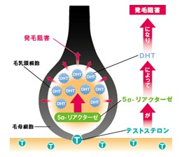 出典:https://www.obihiro-aga.com/