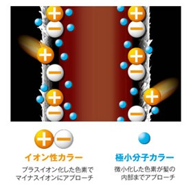 ※イオン性カラー=塩基性染料、極小分子カラー=HC染料のこと 出典:https://www.dhc.co.jp/