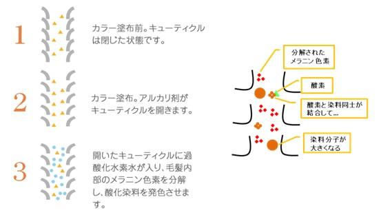 出典:http://shinichihonda.net/ http://blog.miraikan.jst.go.jp/