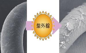 出典:http://jp.sunstar.com/