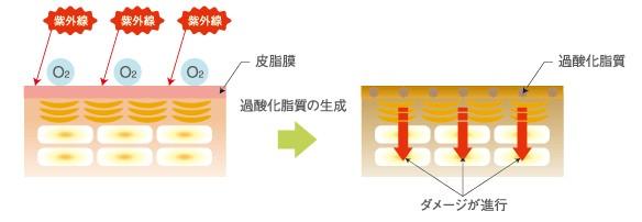 出典:http://www.demi.nicca.co.jp/