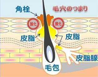 出典:http://milagro.jp/