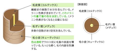出典:https://www.hoyu.co.jp/
