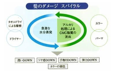 出典:http://www1.enekoshop.jp/shop/socie/