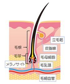出典:http://nourish.toyobiyo.jp/