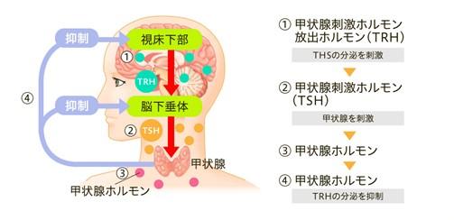 出典:https://kojosengan-hhc.jp/