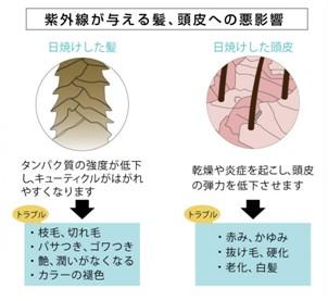 出典:https://www.kamiogroup.jp/news/